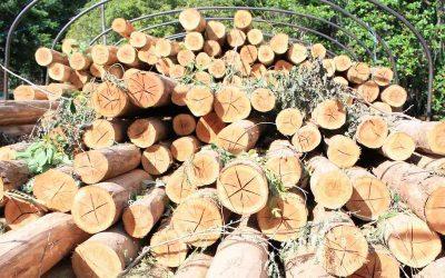 (VIDEO) Fiscalía captura 3 funcionarios y 2 exfuncionarios de la CDMB y 5 personas más por comercialización ilícita de madera en la Serranía de los Yariguíes