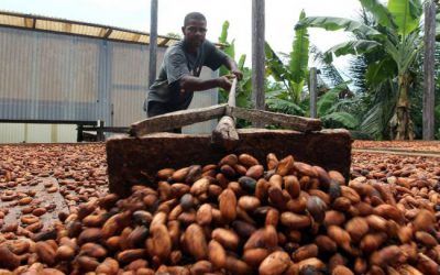 Dos jornadas más para normalizar créditos en cacao