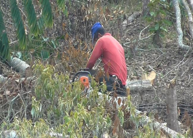 Grupos ilegales han talado 2.000 hectáreas de bosque durante 2018 en Santander