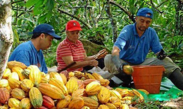 Gobernación no construirá parque Nacional del Cacao en San Vicente de Chucurí