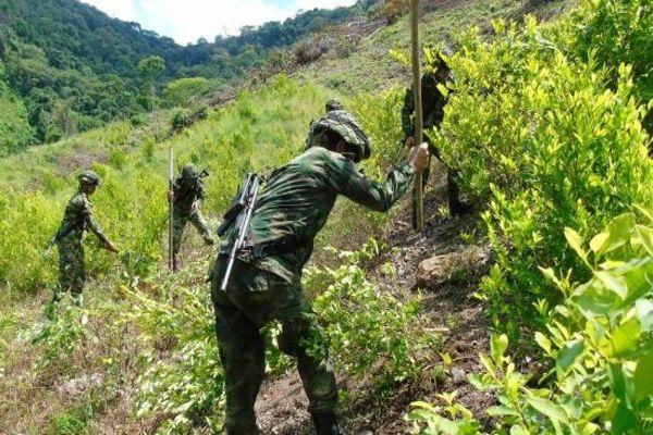 """""""Identificamos algunos cultivos de coca en San Vicente de Chucurí"""", señaló el general Giraldo Bonilla"""