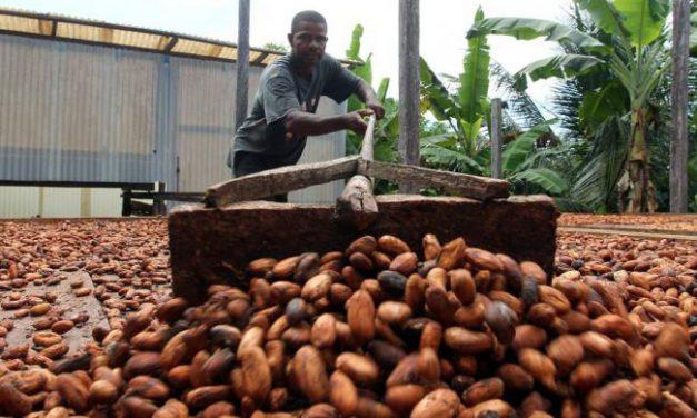 Proyecto de encadenamiento en San Vicente de Chucurí involucrará a más de 159 familias productoras