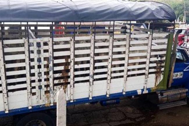 Ofrecen recompensa de $5 millones por información sobre hurto de ganado en Santander