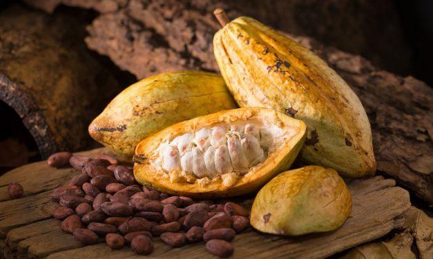 Cacao nacional entre los más finos