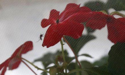 Córtele las alas al dengue