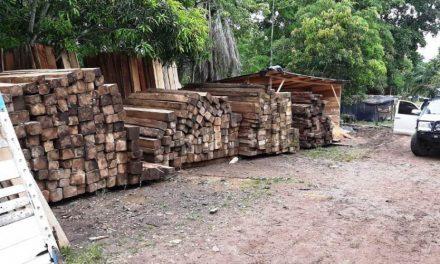 Desarticulan banda que traficaba madera del Parque Natural Serranía de los Yariguíes