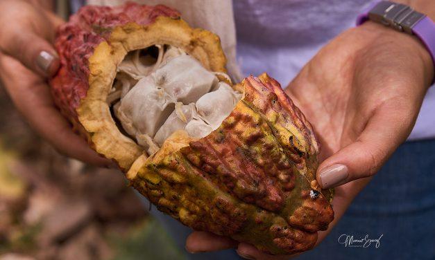 SAN VICENTE DE CHUCURÍ PARTICIPARA EN LA DE EDICIÓN 2021 DEL 'INTERNATIONAL COCOA AWARDS'
